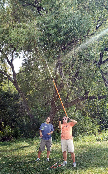 person trimming willow tree with pole saw
